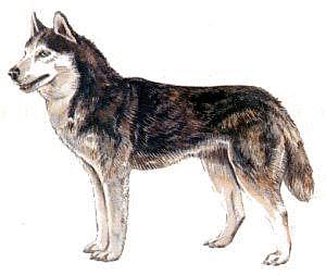 Husky clip art download