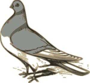 Pigeon clip art at clker vector clip art