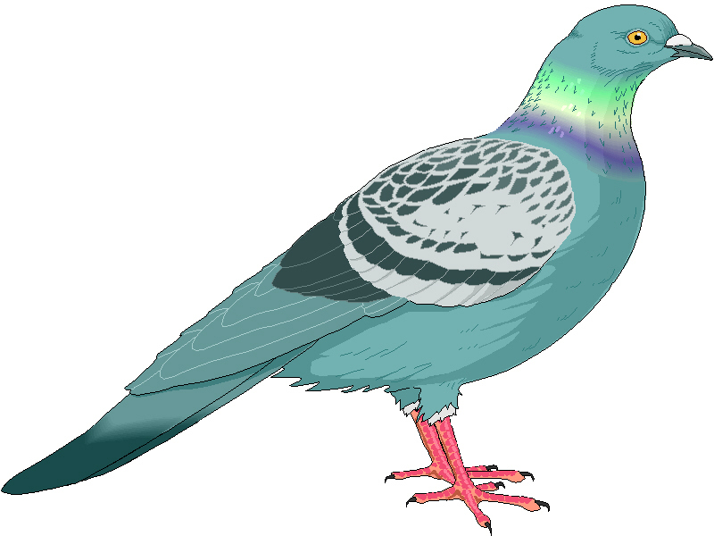 Pigeon clipart pigeonclipart pigeon clip art animal photo and