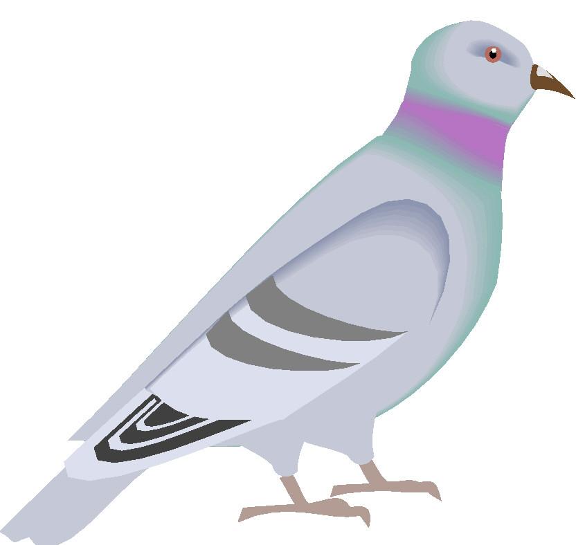 Pigeons clip art