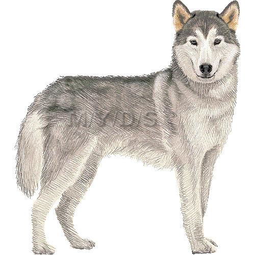 White husky clipart