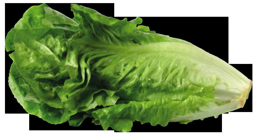 Green lettuce picture clip art