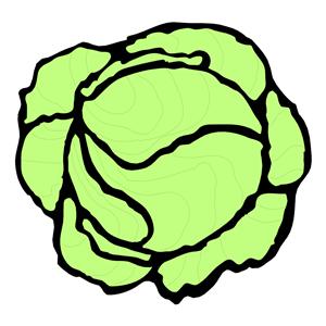 Lettuce clip art clipart 4