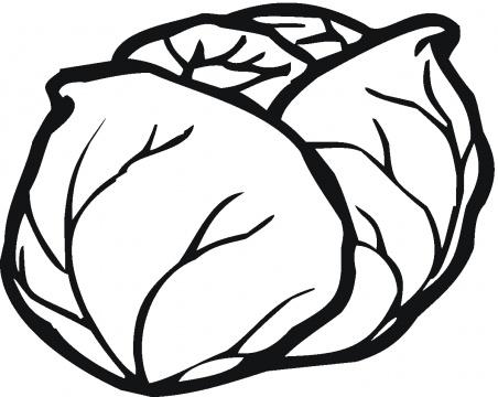 Lettuce clip art clipart 5
