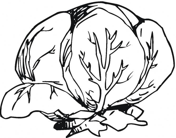 Lettuce clip art clipart 9