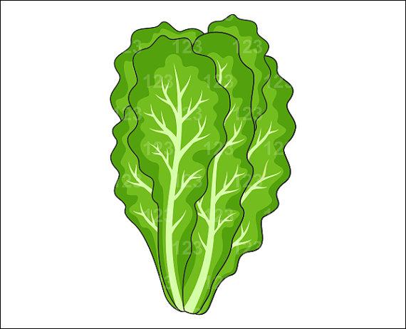 Lettuce clip art co