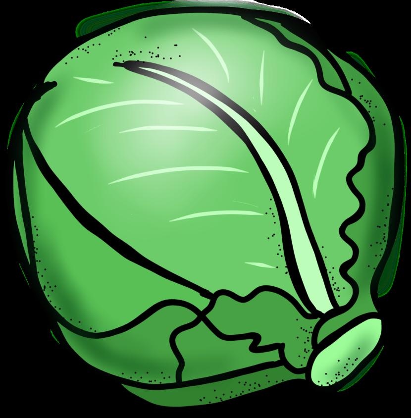 Lettuce clipart 2