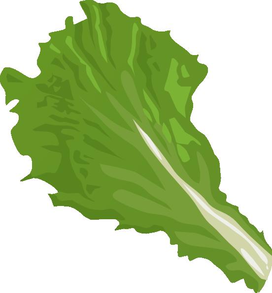 Lettuce clipart 4