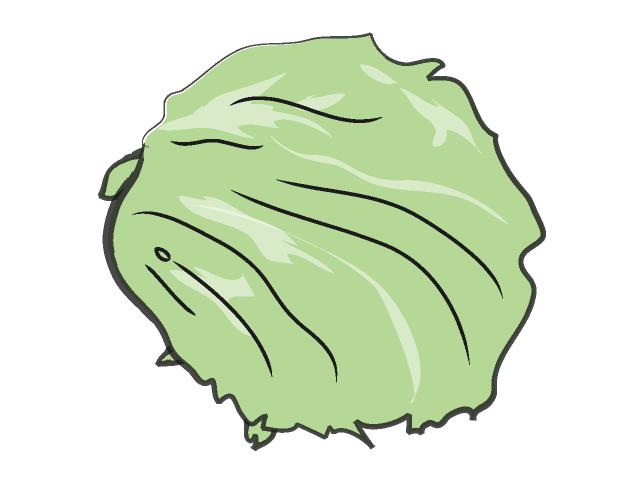 Lettuce clipart 6
