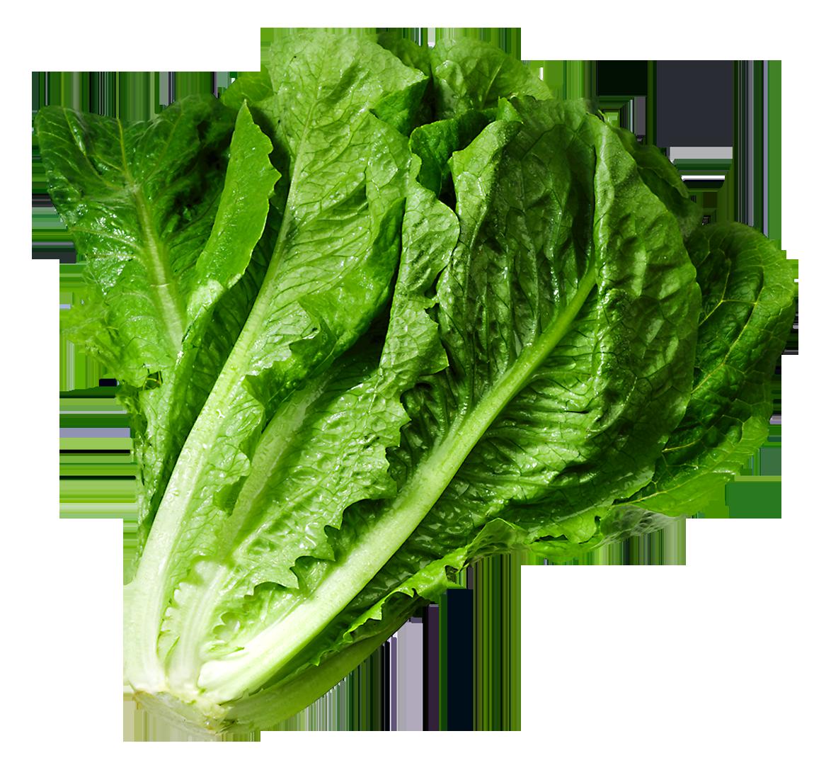 Lettuce picture clipart