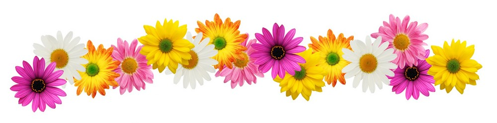 Spring flower border clipart