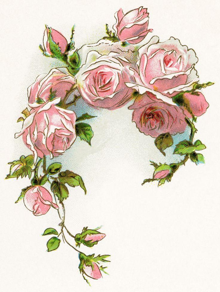 Victorian rose free vintage image free vintage clipart rose