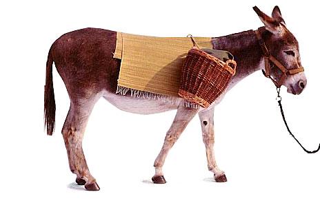 Donkey clipart 3