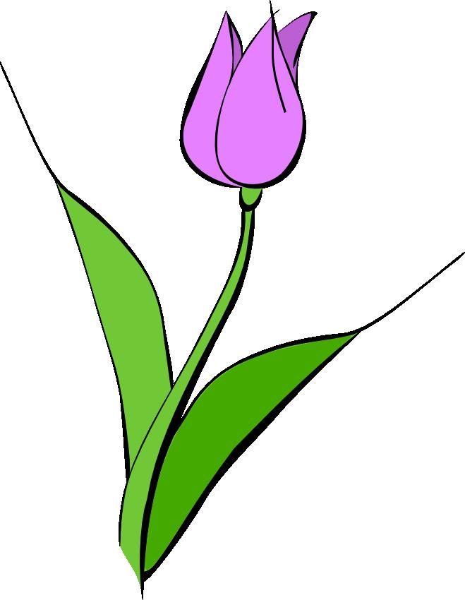 Tulip clip art border free clipart images 2