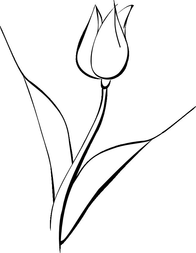 White tulip clip art noelle nichols