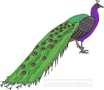 Peacock clip art at clker vector clip art clipartix