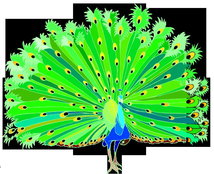 Peacock clip art clipart clipartix 4