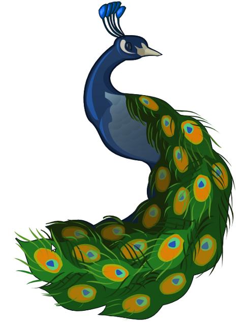 Peacock clip art clipart clipartix 6