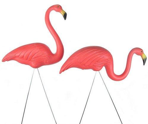 Flamingo clip art free free clipart images 5 clipartix