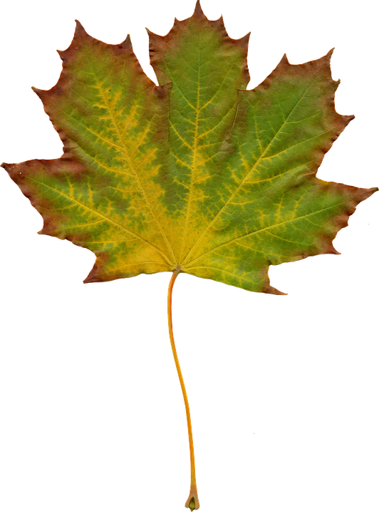Free photo leaves nature autumn clipart free image on 2