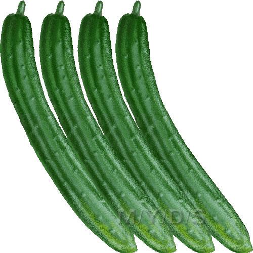 Cucumber clipart free clip art