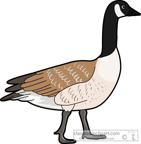 Canadian goose clipart