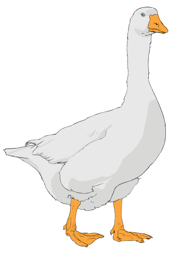Goose clipart clipart kid